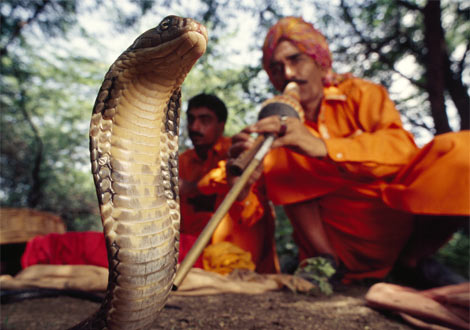 india_snake-charmer