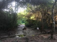 after-the-chennai-rains-2015-04