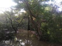 after-the-chennai-rains-2015-06
