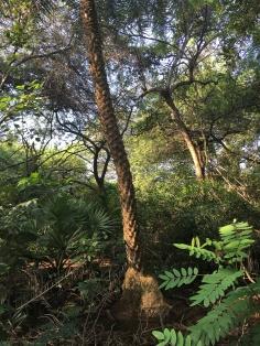 trees-09
